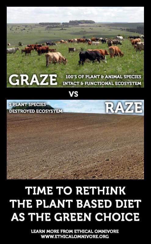 Comparison picture